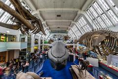 Natural History Museum, London (Michael's shots) Tags: london whale naturalhistorymuseum museums nikond3100