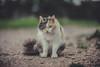 My cat (Vagelis Pikoulas) Tags: cat kitten vilia greece 2018 sigma art f14 bokeh blur canon 6d animal pet