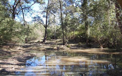 1221 Paddys Flat Road, Tabulam NSW 2469