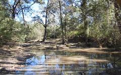1221 Paddys Flat Road, Tabulam NSW