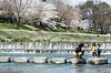 FILM - Glorious Family Time (藍川芥 aikawake) Tags: spring kamogawa river sakura family father son lovely wonderful happiness glorious awesome kids children