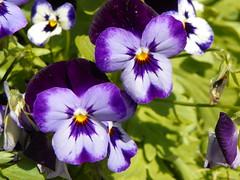 4-21-18 379 (LeeLee's pictures) Tags: citypark botanicalgardens plants flowers garden neworleans