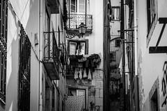 washday (desmokurt1) Tags: lissabon lisbon lagos faro portugal algarve sw bw color kurtessler atlantik tejo vascodegamma downtown village water