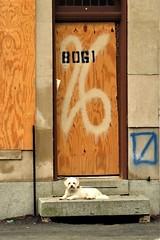 Ellicott City, Maryland, 2018 (A CASUAL PHOTGRAPHER) Tags: ellicottcity howardcounty maryland floods dogs animals pets graffiti plywood doorsdoorways numbers