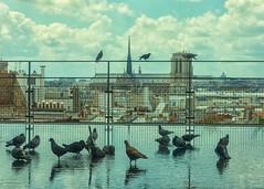 Pigeons de Pompidou (mclcbooks) Tags: paris france notredamedeparis centregeorgespompidou centrepompidou beaubourg pigeons birds reflections