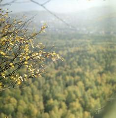 2018-08-10-0002_web (lazagreev) Tags: film120 shootfilm салютс fujicolor filmisnotdead nature deepforest
