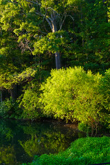 P1080630.jpg (martincutrone) Tags: pond reflections