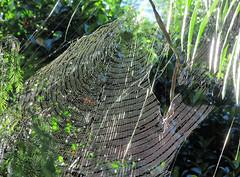 build the web (raffaele pagani) Tags: mauritius island isola oceanoindiano indianocean africa spiaggia beach maretropicale tropicalsea canon