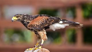 Tamron 150-600 -Bird - 5637