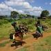 Pokot women carry firewood