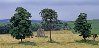 three trees and a windmill