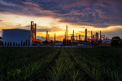 Oil Refinery factory industry (MongkolChuewong) Tags: auto automobile boil boiler capacity chemical chemistry chimney energy engineer engineering environment factory fuel gas gasoline heavy industrial industry landscape light liquid manufacturing metal night oil petrochemical petroleum pipe pipeline plant pollutant pollute pollution power product production refine refinement refinery sky smoke sphere steam storage sunrise tank technology tower worker