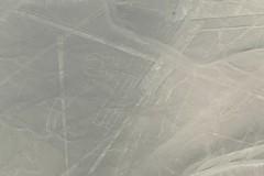 Loro Parrot lineas de Nazca Nasca lines Peru (roli_b) Tags: loro peru parrot ave bird vogel lineas de nazca nasca lines aerial view 2018 luftaufnahme picture bild scharrbild palpa window seat avion aircraft travel viajar tourism turismo