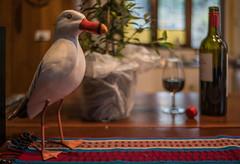 A gull lobs in for drinks (OzzRod) Tags: sony a7rii autotakumar35mmf23 stilllife whimsy gull drinks dailyinaugust2018