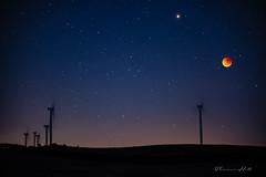 Full moon, lunar eclipse (Theresa Hall (teniche)) Tags: australia bungendore canberra newsouthwales nikond750 tarago taylorcreekroad teniche theresahall bloodmoon fullmoon lunareclipse nightphotography nightsky windturbine windturbines