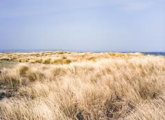 Tentsmuir National Nature Reserve, Scotland. (wojszyca) Tags: fuji gsw680iii 6x8 120 mediumformat fujinon sw 65mm kodak ektachrome e100g epson v800 landscape nature grass sea tenstmuir scotland coast