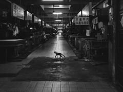 P1030475 (Mickey Huang) Tags: panasonic gx7 mk2 gx80 gx85 mft m43 sigma 19mm f28 dn art black white monochrome mono bw 黑白 taiwan tainan street shot snap market cat