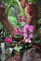 orchid nook :) (green_lover (I wait for your COMMENTS!)) Tags: orchid orchids flowers trunk junglepark tenerife canaryislands spain plants flora tree vegetation
