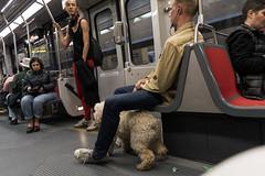Metro, candid scene (Poupetta) Tags: sf ca muni metro