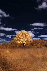 Bright Tree (johaennesy) Tags: tree trees infrared grass orange blue infrarot infraredphotography 650nm sony sonyalpha a580 minolta minoltalens vertical landscape opensourcesoftware gimp rawtherapee ruhrgebiet ruhrwiesen ruhrpott kreisunna schwerte geiseke germany nrw