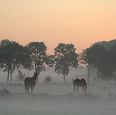 Fog and some moring sun (JustJan) Tags: fog sunrise meadow horse trees