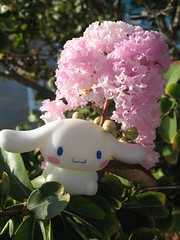Cinna Loves How The Pink Flower Brings Out The Color In His Cheeks (S h e l l y) Tags: pink flowers vacation nature floral toy outside flora texas sanrio day3 cinnamoroll hurricaneharbor