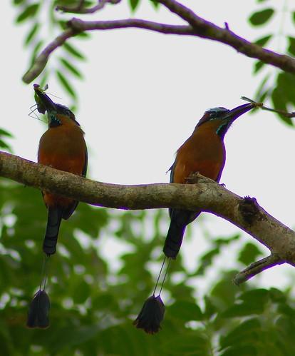 Aves hermosas de la naturaleza Imagenes!!