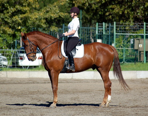 improve your riding, thistle Ridge Skill Builders, Laura Kelland-May, Laurie Higgins, horse riding, horse training Ottawa, Horse training Ontario,