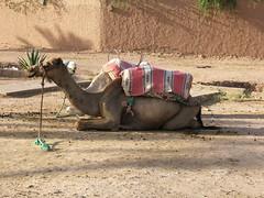 Morocco July 06 065