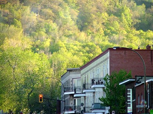 Springtime Mount Royal