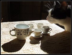 l'intruso #1 (ozio-bao) Tags: morning coffee cat gatto caff intruso challengeyouwinner 3wayicon oziobao