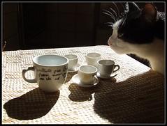 l'intruso #1 (ozio-bao) Tags: morning coffee cat gatto caffè intruso challengeyouwinner 3wayicon oziobao