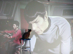 Fascinating (Kevin Steele) Tags: startrek toby orange cat orangecat projector tabby kitty spock ladder uhura orangeandwhitecat