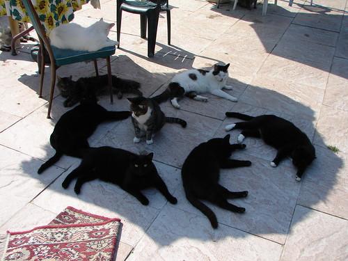 Cat Conspiracy