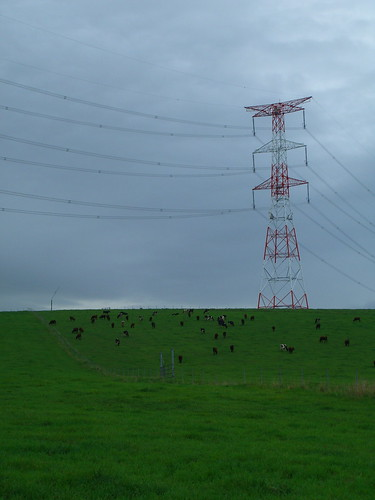 Figure 3. Cows and power lines - whos the boss? Photo by chris_hunnicutt on Flickr.