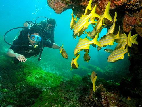 Mergulho em Fernando de Noronha - Brasil