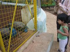 138_0207 (S Jagadish) Tags: peacock hillstation thatha yercaud jaagruthi santhanam 200609