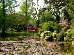 Magic spring garden (2composers) Tags: flowers plants lake reflection tree water spring flora purple cologne köln riehl favoritegarden compositionsphotography