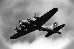 Aluminum Overcast (bogray) Tags: blackandwhite history vintage airplane flying b17 warbird