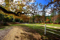 Whispers [ of the ] Fall (| HD |) Tags: color tree fall 20d nature oregon canon fence garden landscape whisper hd neverland darwish hamad