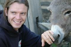 IMGP2738 (jasoncurtis79) Tags: cute animals cows shelburnefarms brownswiss beautifulbarns