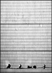 grid chart (nevertorun) Tags: street city urban blackandwhite bw abstract bird texture geometric composition blackwhite geometry moscow surrealism surreal math concept conceptual conception streetshot