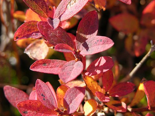 Rote Pflanze