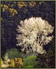 The Last Winter Tree (Catching Magic) Tags: winter newzealand tree nature spring olympus e300 tiraudan