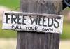 FREE WEEDS by Through Joanne's eye