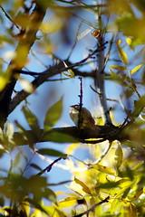 QueenStBird (calvinwithhobbes) Tags: bird nikon d70 queenstw 85mmf14