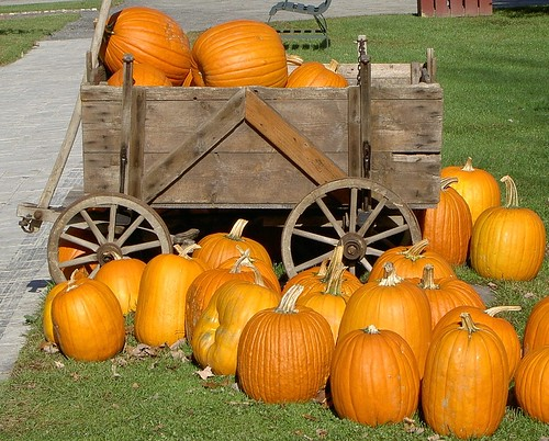 Pumpkin Wagon Ride