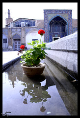 (R.mohseni) Tags: reflection iran reza isfahan      mohseni    ipcselection
