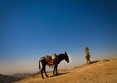 Donkey in Petra, Jordan (Eric Lafforgue) Tags: children kid child middleeast donkey unescoworldheritagesite jordan hasselblad arabia h2 ramadan enfant jordanien ane jordanie jordania 148  giordania arabie  imacon  jordani rdn alurdun lafforgue jordnia ericlafforgue hasselbladh2 lafforguemaccom nabataeans lafforguemaccomhasselbladimaconhasselblad cfh39cfh39hasselblad cfh39 mytripsmypics    johannludwigburckhardt yordania  iordania   jordnsko