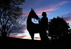 friends at the end of the day (Dan65) Tags: sunset sky horse silhouette explore irene top20horsepix 13 akhalteke magicdonkey animaladdiction gazan